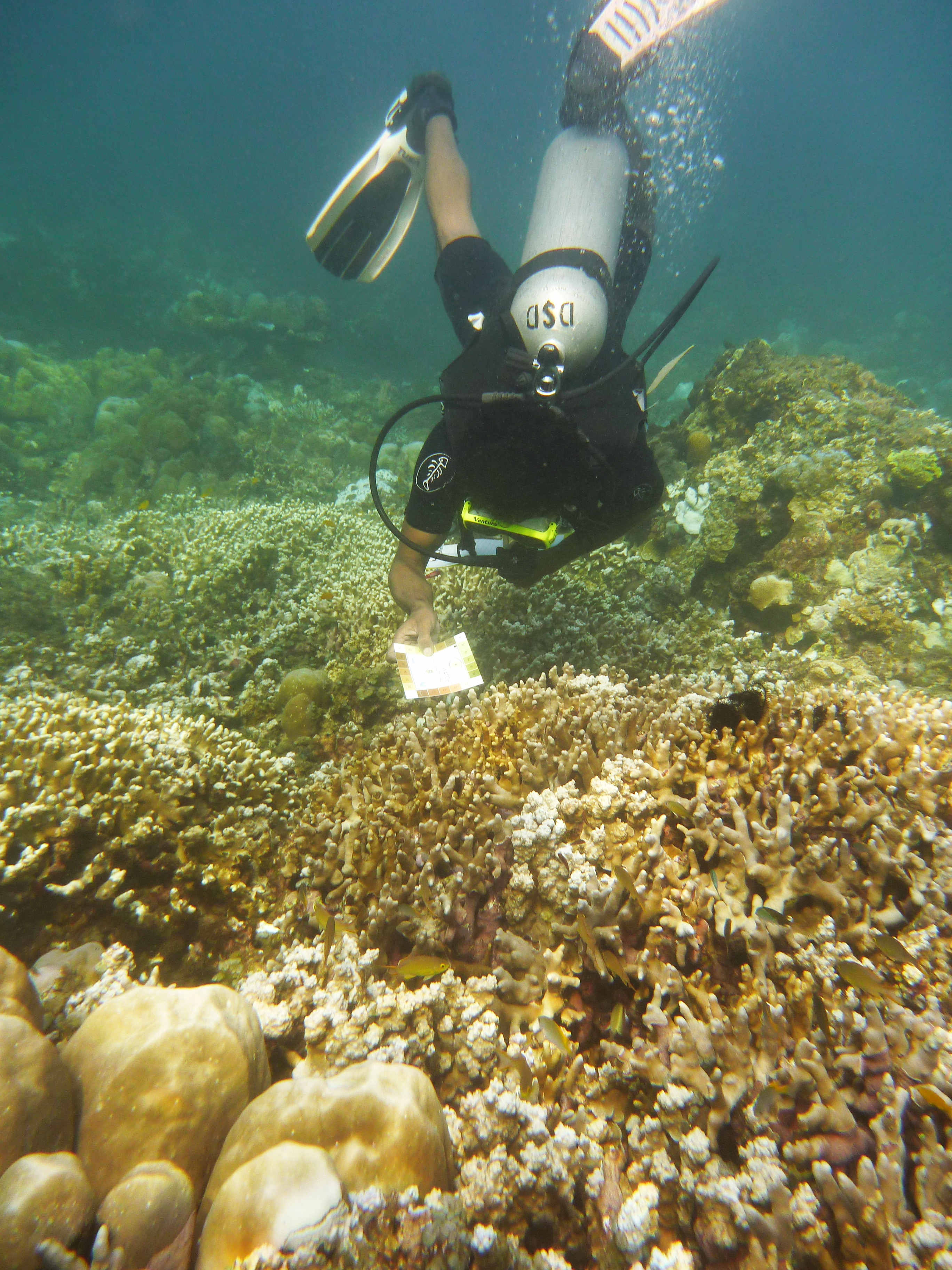 natural corals resilient