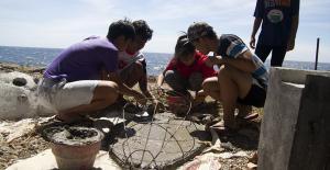 Bali Coral reef rebuilding- turtle