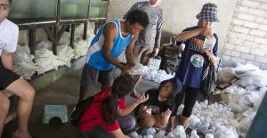 Bali Coral reef rebuilding sustainable ornamental fishing
