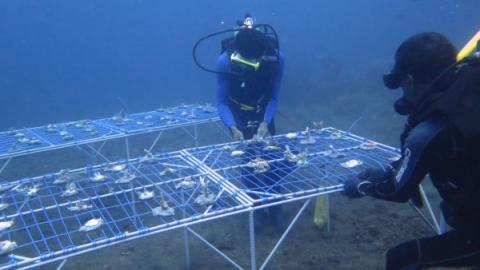 dive volunteers launching coral nursery table