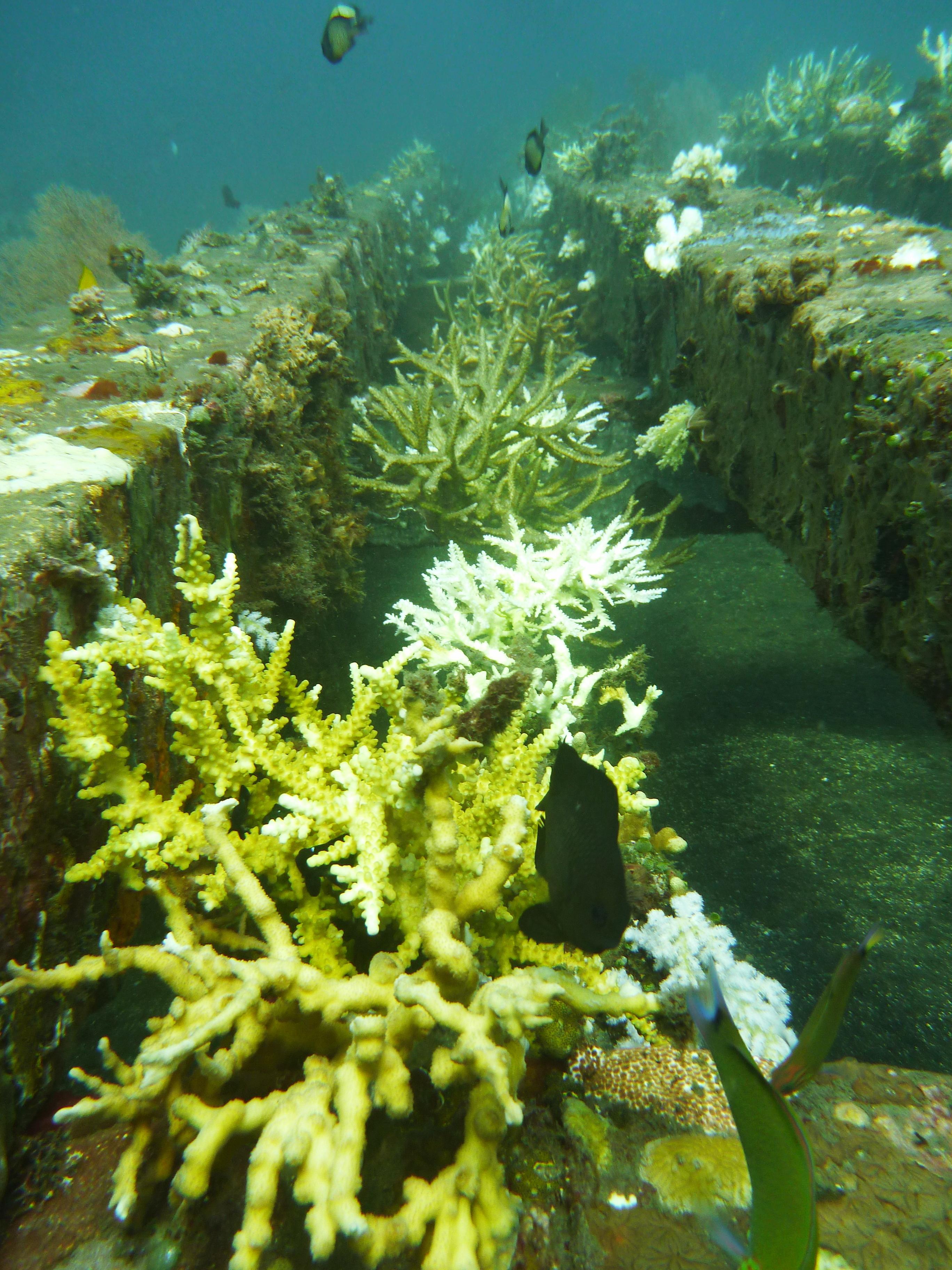 coral rope nursery - line 1