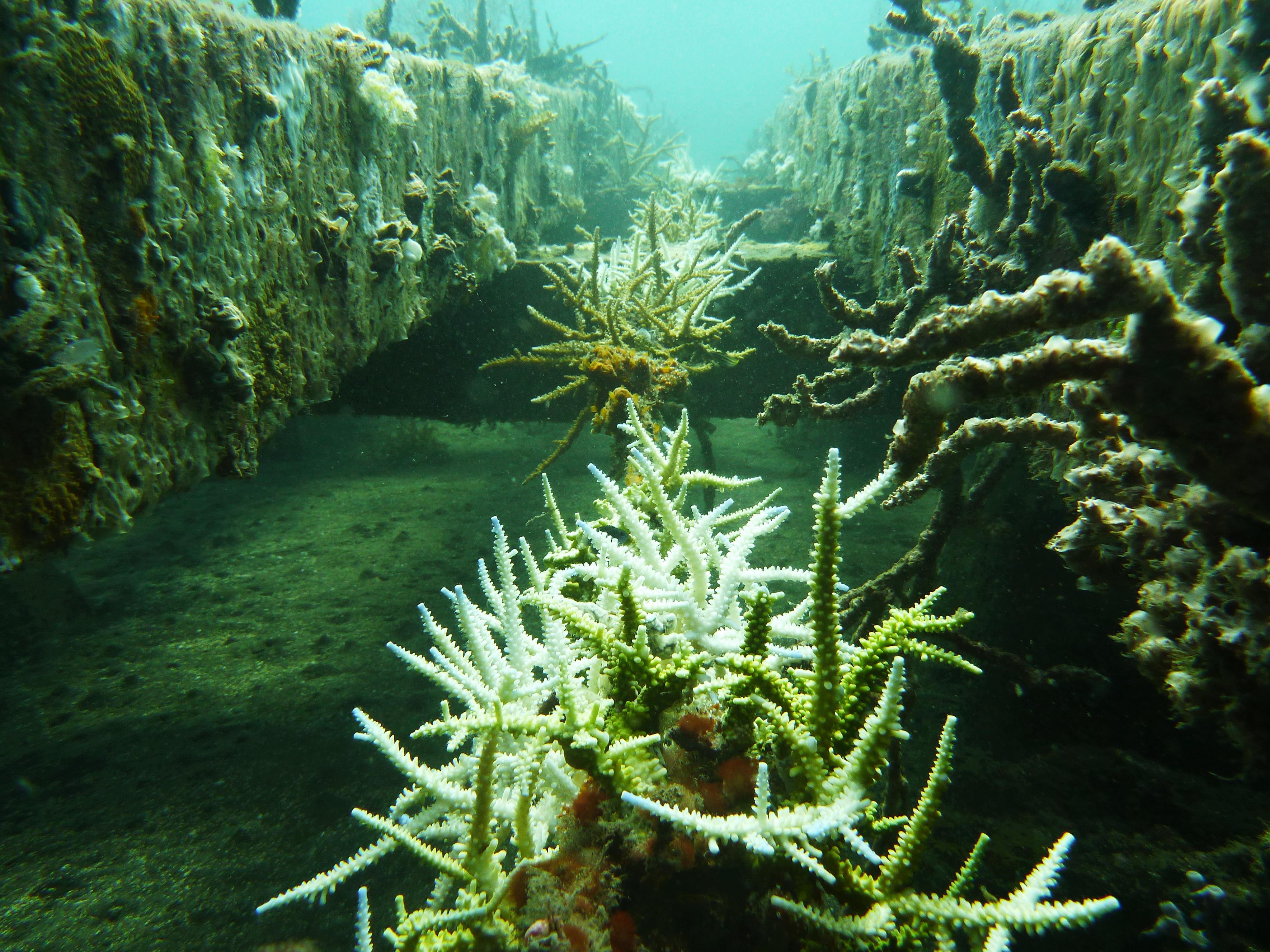 coral rope nursery - line 2