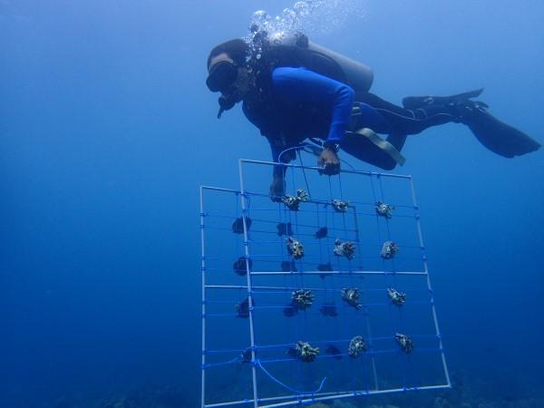 coral table platform