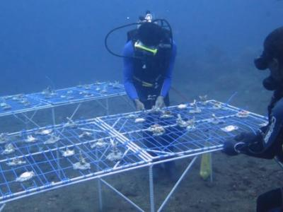 dive volunteers launching coral nursery table